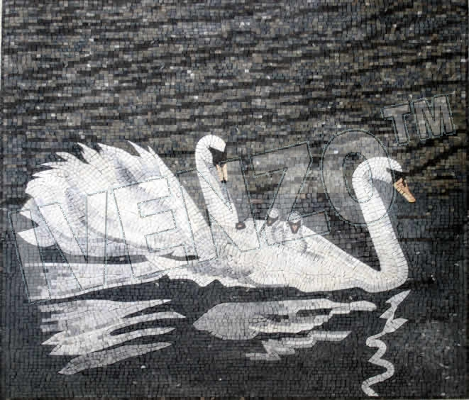 Mosaic AN050 swans with offspring