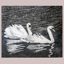 Mosaic swans with offspring